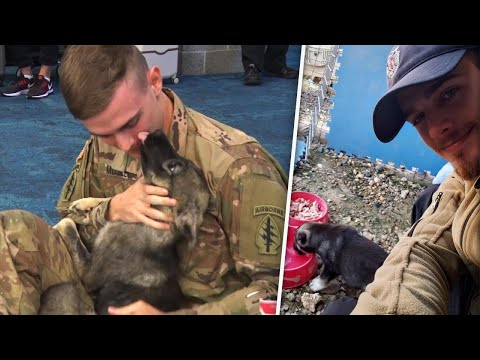 Soldier reunited with puppy he rescued from Syria