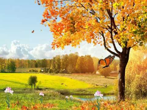 Beautiful Nature Animated Wallpaper http://www ...