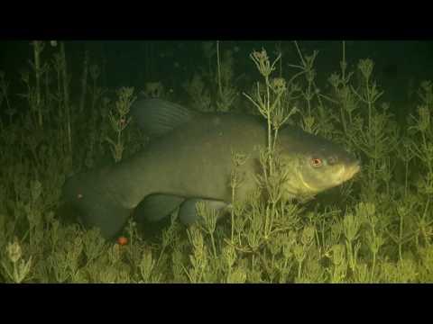 ПОДВОДНАЯ БЕЛАРУСЬ Озеро. Underwater Belarus Nature