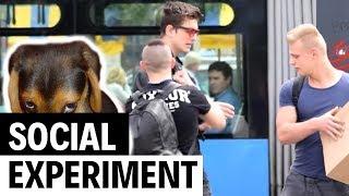 Zlostavljam psa na ulici | Social experiment | Magic Leon