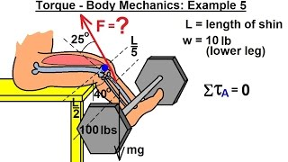 Physics - Mechanics: Ch 15 Torque (17 of 25) Body Mechanics: Ex. 5, F=? Leg Lifting Weights