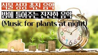 식물 성장 촉진 음악 식물들이 밤에 듣는 편안한 음악 …