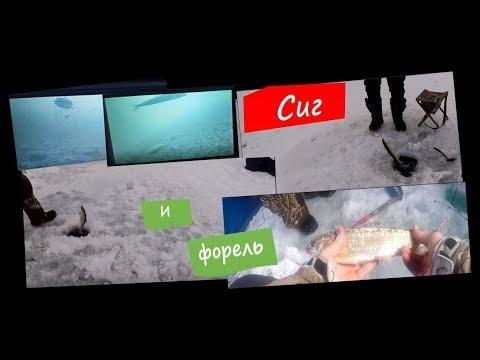 Много сига и форели на горном водоеме. Видео с подводной камеры.