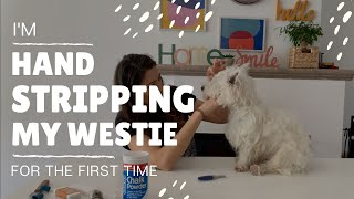 I'm hand stripping my Westie for the first time!