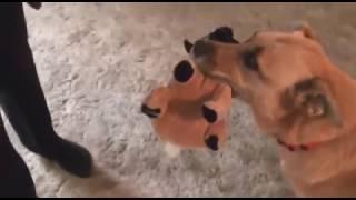 Dog Rescue / Georgina and her puppies / Qawra / AAA Malta