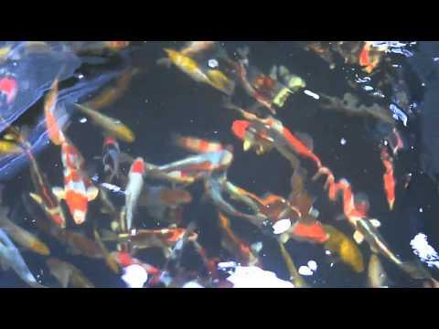Modern koi blog 252 wasserf lle funnycat tv for Teich salz gegen algen