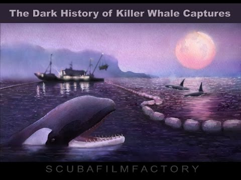The Dark History of Killer Whale Captures