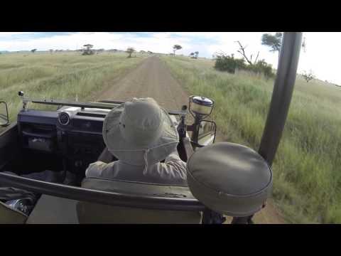 Hyena, Tsetse Flies & Monkeys, Singita Gremeti, Tanzania, African Safari, 2 March 2016, GP020549