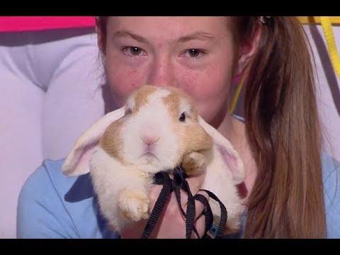 Zobacz występ zwariowanych królików [Mam Talent!]