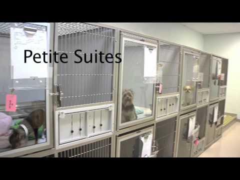 Bayside Pet Resort & Spa Virtual Tour
