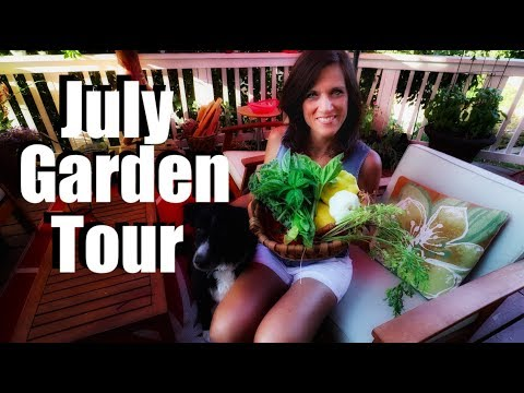 July Garden Tour & Tips: Planting Late Summer Veggies, Strawberry, Squash Harvest & More - 동영상