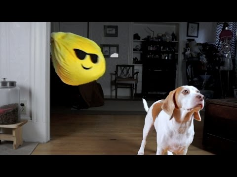 Dog Pranked with Giant Emoji: Cute Dog Maymo