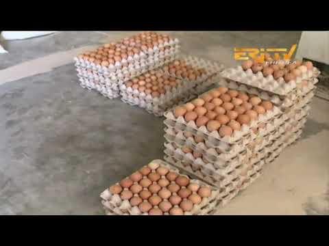 ERi-TV, Eritrea - መደብ ሕርሻ - ኣብነታዊ ሕርሻ - Exemplary Farms