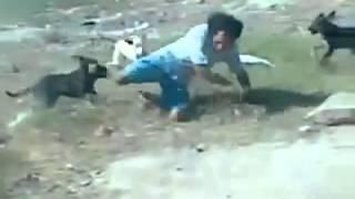 Bergaduh Dengan Anjing?