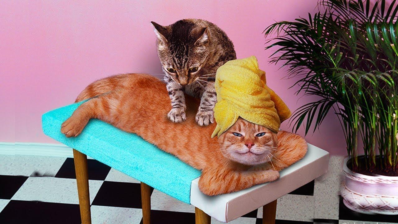 ребенка парикмахерская открытки с котом фото