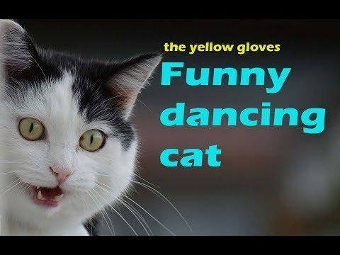 Very Funny  dancing cat  video