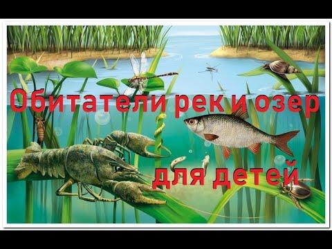 Обитатели рек и озер. Познавательное  видео для малышей на русском и английском.