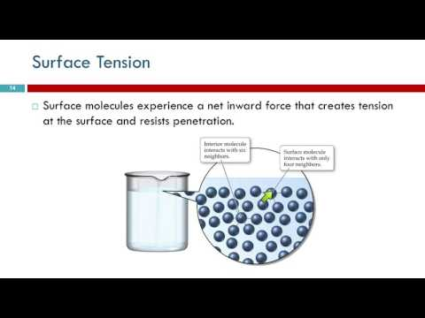 12.3 Intermolecular Forces In Action: Surface Tension \u0026 Viscosity