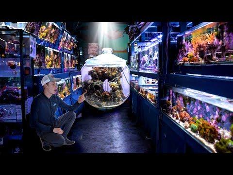 Incredible Fish Store Tour - Preuss Pets