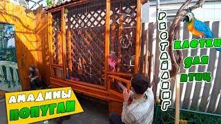 Амадины и попугаи в клетке после рестайлинга. Смотреть до конца!