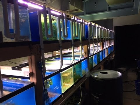 Fish Room Tour - 45 Aquarium Central System, Planted Tanks And More