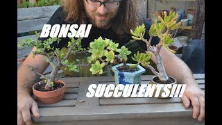 Succulent Bonsai Tour June 2017