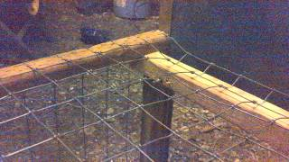 Homemade box / live trap for raccoons or other critters (sliding door model)