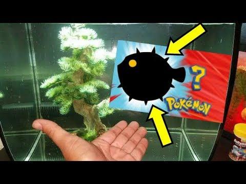 My AQUARIUM FISH EVOLVED! *WHAT HAPPENED TO MY FISH?!*