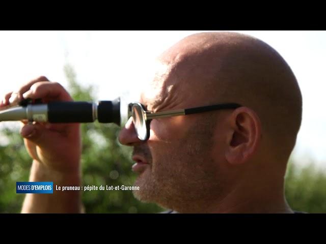 Modes d'emplois - Le pruneau : pépite du Lot-et-Garonne