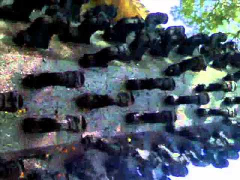 ujjain visit