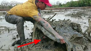 Amazing superhuman expertise in catching crabs in holes with their bare hands