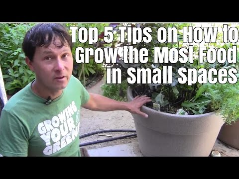 Top 5 Tips on How to Grow the Most Food in Small Space Garde