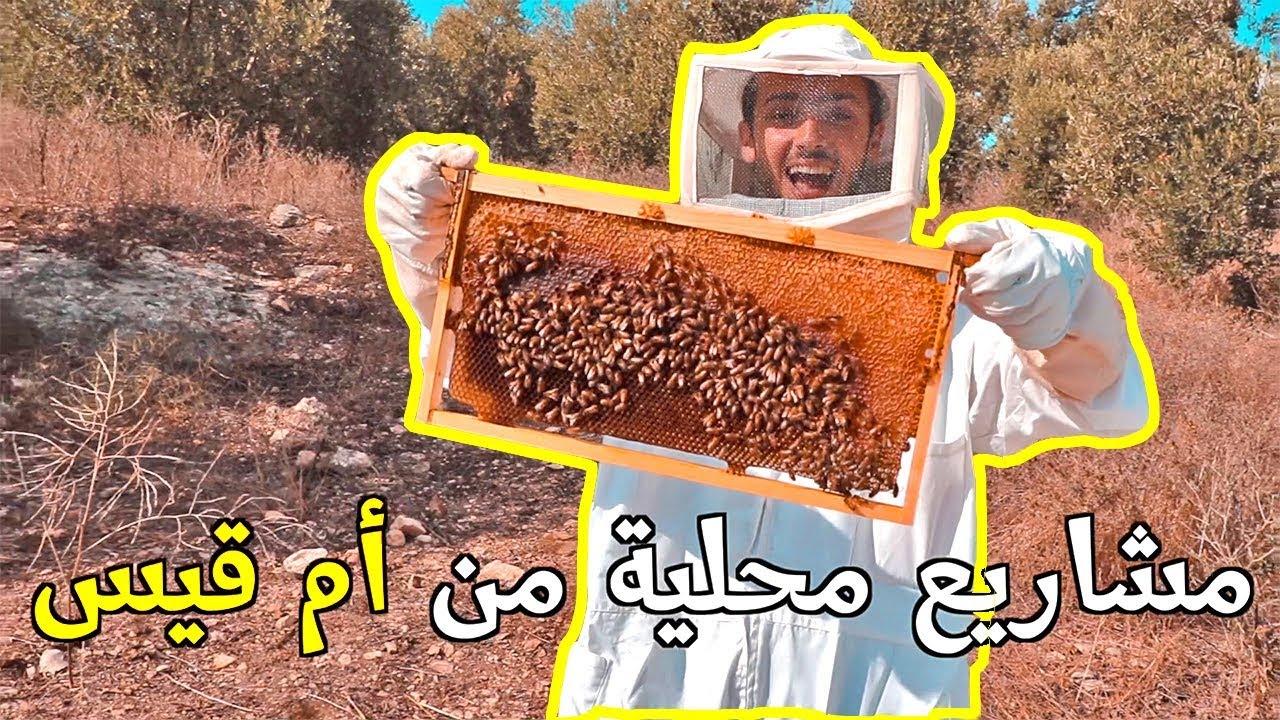 تجربة تربية النحل وطبخ أكلات أردنية   مشاريع أم قيس