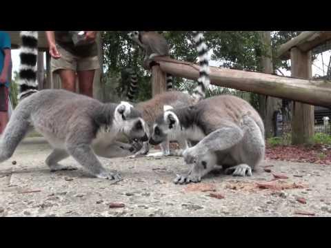 Encounter: Safari Wilderness Ranch