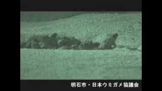 akashi umigame2008