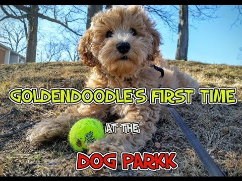 PUPPY'S first visit to the DOG PARK!! SO CUTE!!