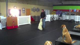Finnegan Martin, Therapy Dog Training Charlotte North Carolina
