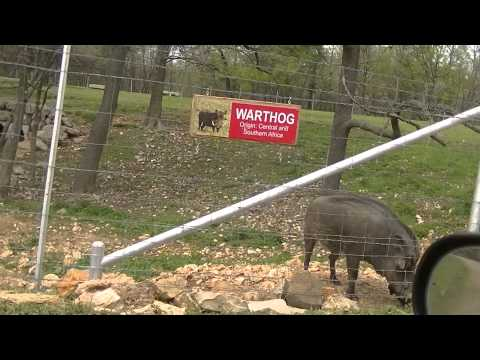 World Wilderness safari park, Arkansas USA