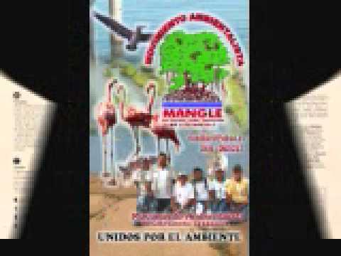 PARED de PET MANGLE 1era en Sede Zulia Venezuela