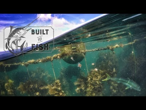 Built to Fish Ep 04: The Coromandel Mussel Farms.