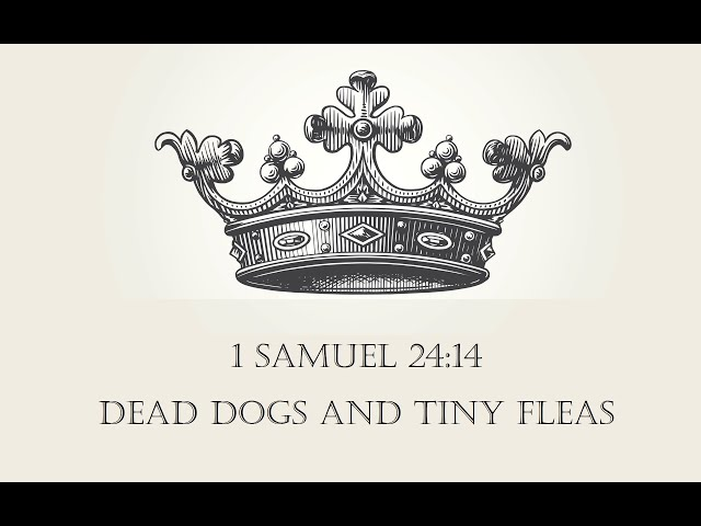 DEAD DOGS AND TINY FLEAS