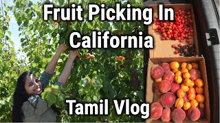 பழங்கள் பறிக்க வாங்க Fruit Picking Vlog/Cherry/Apricot/Peach/Blackberry/Tamil Vlog #24/OneDayTrip