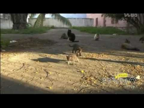 【悶絶注意】可愛すぎる子猫がにゃー!in Havana:Cute cat meows in Havana2