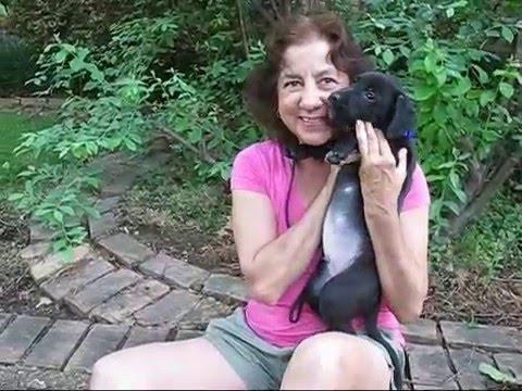 Jackosn Good Dog Rescue