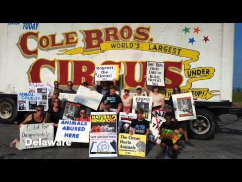 2015 Circus Protests: Animal Advocacy At Its Finest!