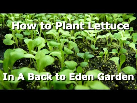 How to Plant in a Back to Eden Garden (Lettuce, etc.) - YouTube