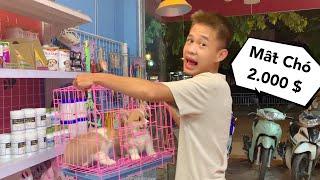 Thằng Cò : Shop Đột Nhiên Mất Trộm Chó Nghìn Đô Thử Lòng Sếp