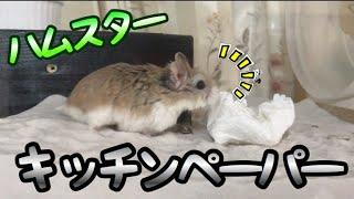 はる君ペットチャンネルの説明・・・ 元気いっぱいのハムちゃんズ動画で...