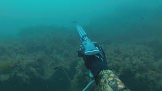 Зубарик Горбыль Крымская подводная охота