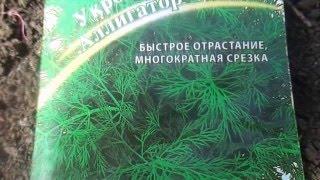 видео Выращивание укропа на подоконнике: рекомендации